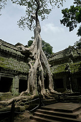 Tree Roots and Temple